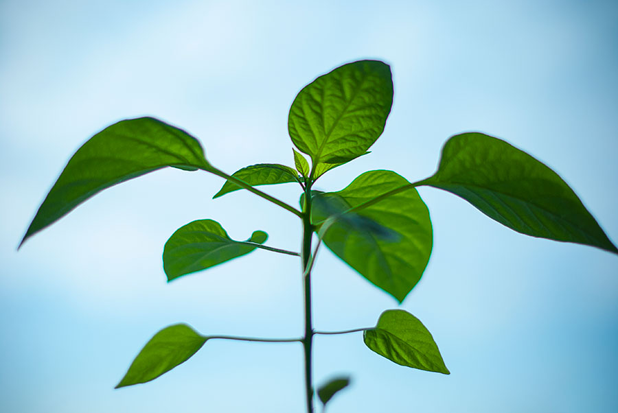 Growing plant against blue sky